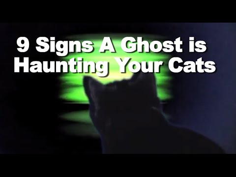 Can Cats See Ghosts Or Demons
