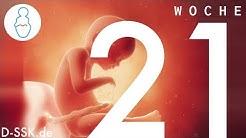 21. SSW / 21. Schwangerschaftswoche ✪ D-SSK.de