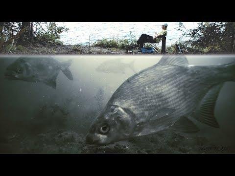 Реакция рыбы на МЕЛАССУ ЛЕЩ! Рыбалка на Фидер с тремя подводными камерами