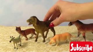 Invatam animalele domestice la copilul destept