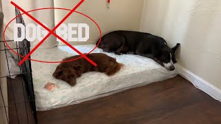 STOP BUYING DOG BEDS
