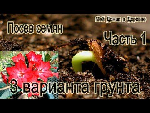 Адениумы! Посев семян! (Часть 1)