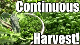 How & Why We Strive for a Continuous Harvest (Zone 5)