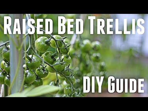 How to Build a Tomato String Trellis for a Raised Garden Bed - Inexpensive and Easy