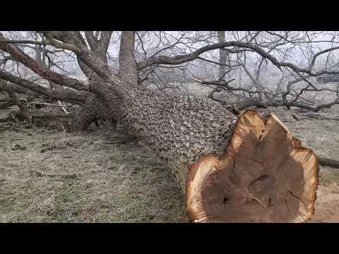 A fairly BIG tree..
