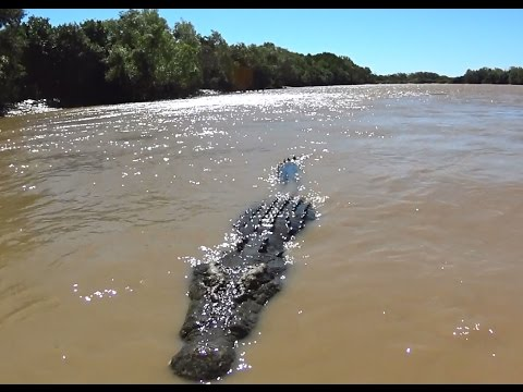 Scary video, Biggest Saltwater Crocodile I have ever seen, Northern Territory, Australian Wildlife