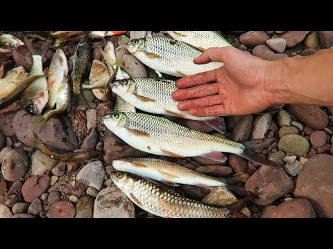 MƯA ĐÁ • Tập 1 - Bắt Cá Suối 2017