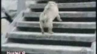 animals do the funniest things