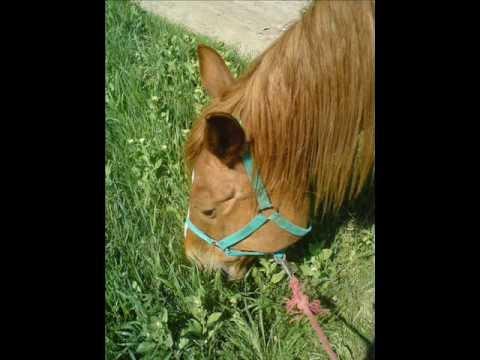 Egy ló és egy lány története letöltés