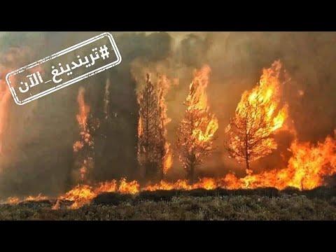 كيف تفاعل مشاهير العرب مع حرائق لبنان  - نشر قبل 23 دقيقة