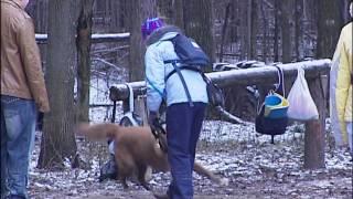 Собаки из приюта - лучшие друзья и напарники