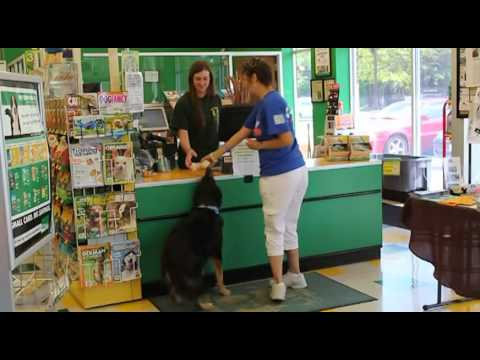 Shakey gets a bath at pet supplies plus youtube shakey gets a bath at pet supplies plus solutioingenieria Images