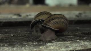 La ferme aux escargots / The farm of snails  (Drôme - France)