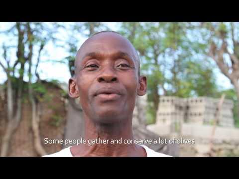 Moringa Farming Presentation Video