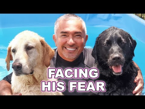 Cesar Millan Helped My Guide Dog Overcome His Fear