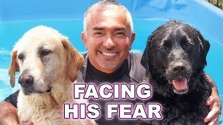 Download Cesar Millan Helped My Guide Dog Overcome His Fear Mp3 and Videos
