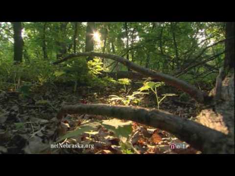 A Day in Fontenelle Forest - Nebraska Stories