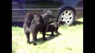 Inacreditável... Cachorros separam briga de gatos