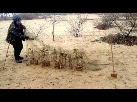 Путанка ловли сеть птиц для бабай