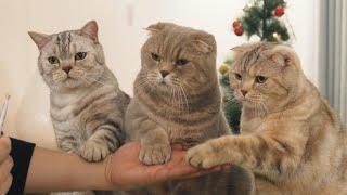 삼둥이에-이어-손-주는-고양이-등장했어요