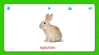 Кролик - Карточки Для Детей - Домашние Животные - Карточки Домана