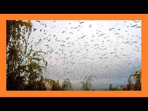 Птицы улетели на юг Этот прекрасный мир��
