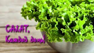САЛАТ - жизненно важное растение!