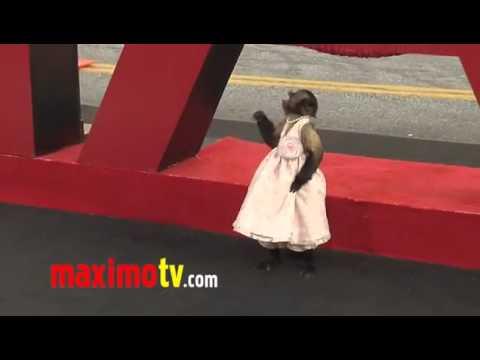 فيديو-للقردة-أثناء-إستعراضها-أمام-كاميرات-المصورين