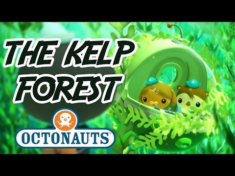 Octonauts - Into the Kelp Forest | Undersea Adventures | Cartoons for Kids