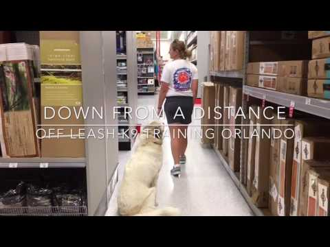 """10 mo Great Pyrenees mix """"Harper""""