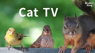 Cat TV 2020: 8 Hours  Birds for Cats to Watch, Relax Your Pets, Beautiful Birds, Squirrels.