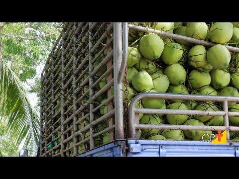Clique e veja o vídeo Curso Industrialização do Coco - Processo Artesanal