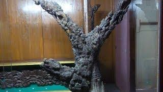 Pohon Kalpataru Peninggalan Sunan Bonang di Tuban