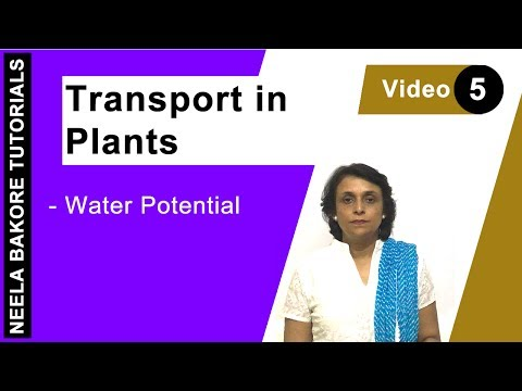 Transport in Plants - Water potential