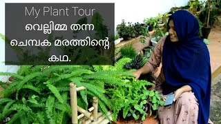 My plant corner tour in Malayalam with plant name/ my little green space