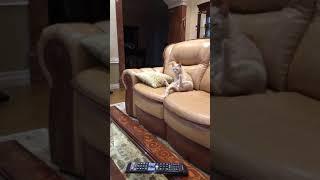 Кот спустя 5 лет после кастрации