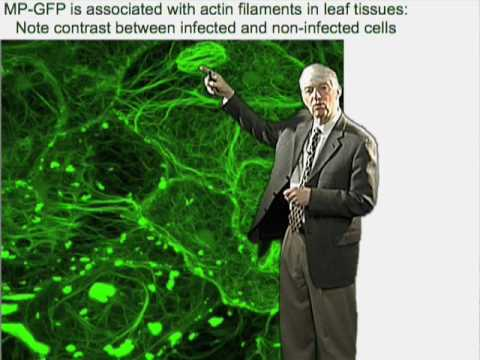 Roger Beachy (Danforth Center) Part 1: Biology of Plant Virus Infection