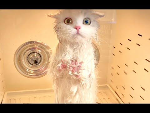 年前大扫除,铲屎官挑战一口气洗五只猫!