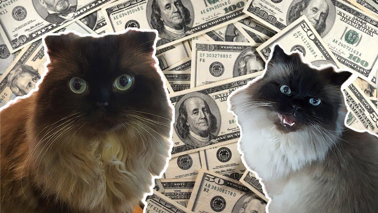 Die teuersten katzenrassen der welt youtube for Die starkste taschenlampe der welt