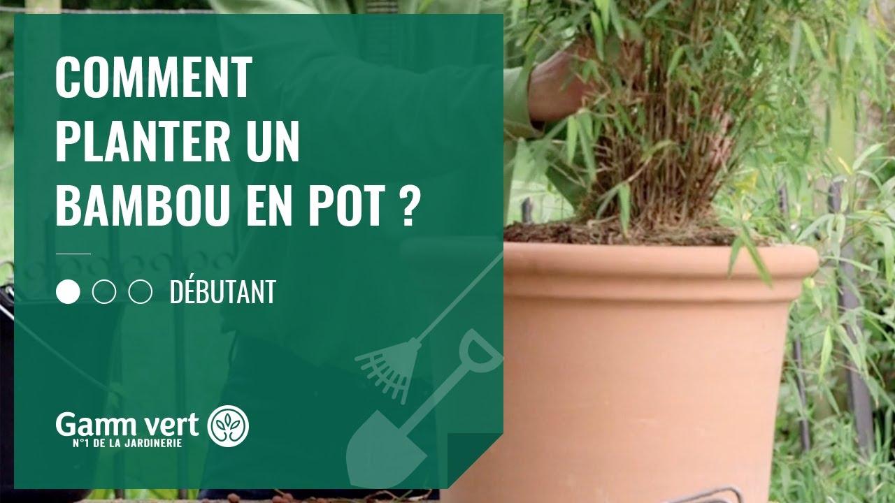 Comment Faire Pousser Bambou [tuto] comment planter un bambou en pot ? – jardinerie gamm vert