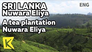 【K】Sri Lanka Travel-Nuwara Eliya[스리랑카 여행-누와라엘리야]홍차 재배지/Observatory/Water fall/Tea/Cloud sea