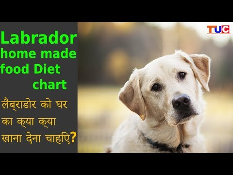 Labrador HomeMade Food Diet Chart : Dog Tips : TUC