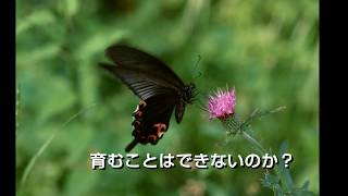 徳島文学協会(乱世編)