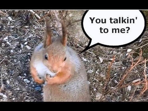 Smart Squirrels