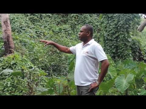 Loving Islands Matuku Island Organic Farming Project - Session 1