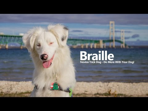 Braille - Novice Trick Dog Submission