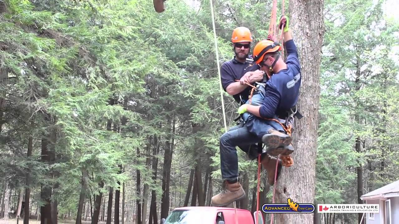 Emergency Readiness and High Angle Rescue | Arborist courses offered