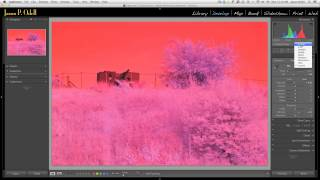 Setting White Balance on Infrared Images with Lightroom