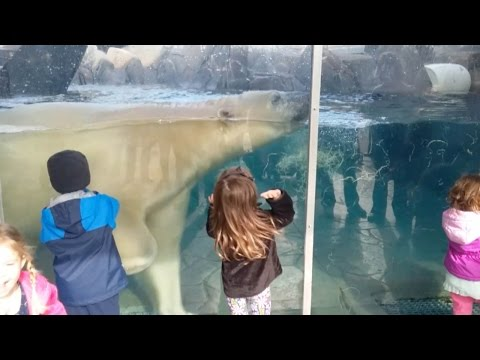Terrifying Moment Polar Bear Headbutts Glass At Zoo