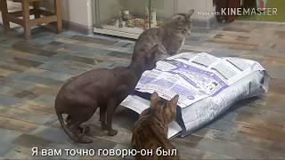 Видео про кошек. Остатки корма в мешке.